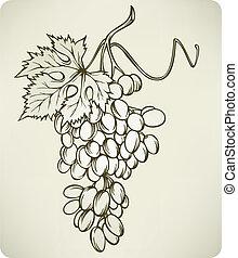 hand-drawing, vector, druiven, illustration.