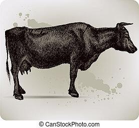 hand-drawing., vector, illustration., koe