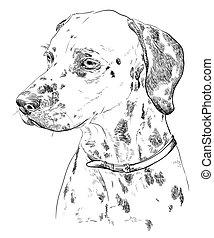 Hand drawing vector portrait of dalmatian