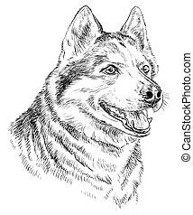 Hand drawing vector portrait of siberian husky