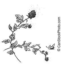 Hand drawing watercolor black chrysanthemum flowers and leaves ornament