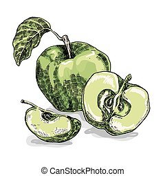 Hand drawn apple. Vector illustration. Sketch style