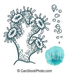 Hand drawn aquatic coral doodle vector illustration.