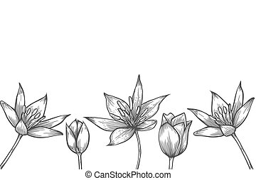 Vector coloring book pages - Hand drawn artwork flowers....