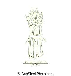 Hand drawn asparagus - Hand drawn fresh tasty asparagus
