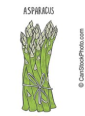 Hand drawn asparagus. Template for your design works....