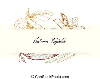 Hand Drawn Autumn Vegetables of Fava Beans and Okra - Autumn...