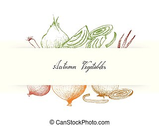 Hand Drawn Autumn Vegetables of Onions and Scallions -...