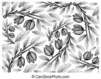 Hand Drawn Background of Almonds on Branch - Illustration...