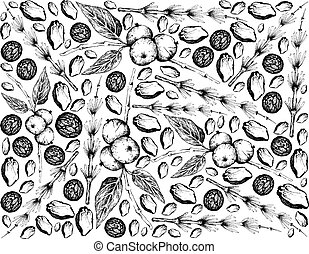 Illustration Hand Drawn Sketch Background of Black Walnuts or Juglans Nigra and Equisetum, Horsetail, Snake Grass or Puzzlegrass Plants.