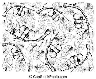 Hand Drawn Background of Fresh Acerola Cherries