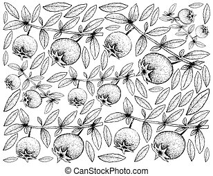 Hand Drawn Background of Fresh Chilean Guava Fruits