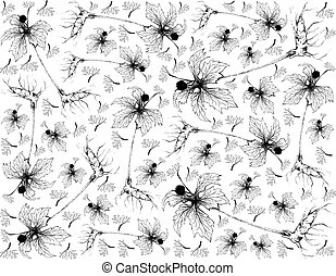 Herbal and Plant, Hand Drawn Illustration Background of Hydrastis Canadensis, Goldenseal, Orangeroot or Yellow Puccoon Plants, Used to Treat Cancer, Mouth Ailments, Canker Sores, Stomach Issues and Skin Conditions