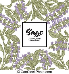 Hand drawn background with Salvia officinalis or Sage. ...