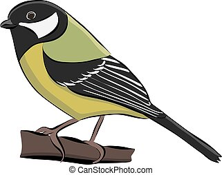 Hand drawn bird great tit, vector