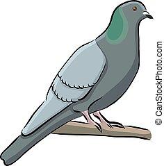 Hand drawn bird grey dove