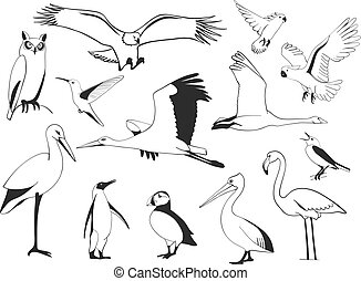 Hand drawn bird set, vector