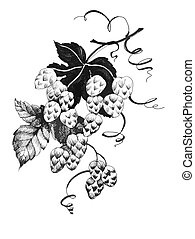 Hand drawn black and white illustration of grape branch with bunch of grapes and leaves. Wine label design element.