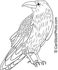 Hand-drawn black crow. Raven, bird sketch, vector illustration.
