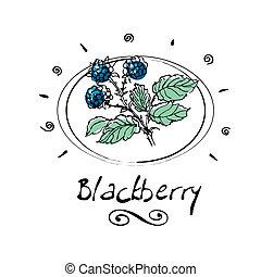 blackberry - hand drawn blackberry in vignette