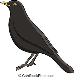 Hand drawn blackbird sketch, vector
