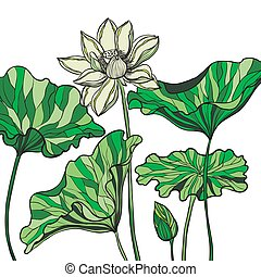 Hand drawn blooming lotus flowers or waterlily with leaves