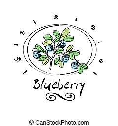 blueberry - hand drawn blueberry in vignette