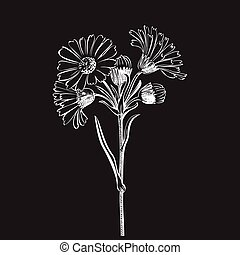 Hand drawn bouquet of daisy flowers isolated on white ...
