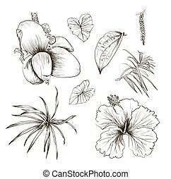 Hand drawn branches and leaves of tropical plants. Palm fronds isolated