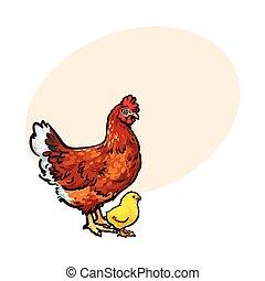 Hand drawn brown hen and little yellow newborn chicken