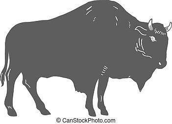 Hand Drawn Buffalo Illustration isolated on white. Vector...