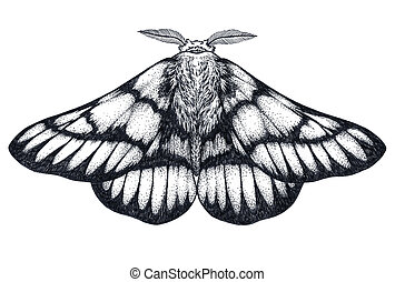 Hand drawn butterfly tattoo. Dotwork tattoo. Hemileuca...