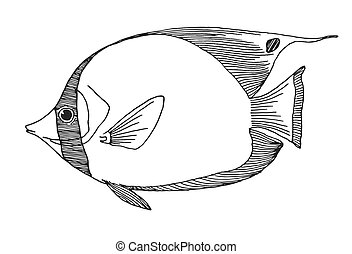 Hand drawn butterflyfish. Vector illustration in sketch style
