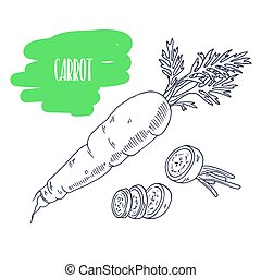 Hand drawn carrot isolated on white. Sketch style vegetables with slices for market, kitchen or food package design