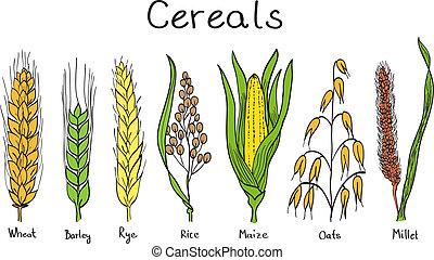hand-drawn, cereales, ilustración