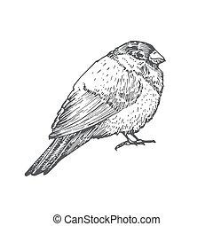 Hand Drawn Christmas Bullfinch Bird Vector Illustration. ...