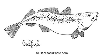 Hand drawn codfish. Vector illustration in sketch style.