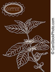 Hand drawn coffee plant illustration - Vintage sketch style...