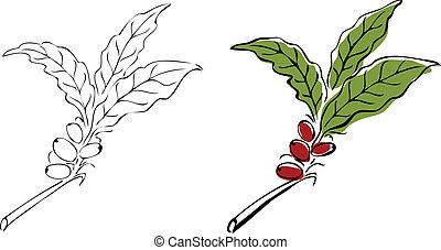 Hand drawn coffee tree branch