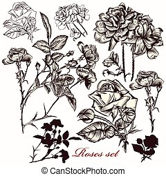 Hand drawn collection of vector roses.eps