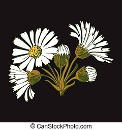 Hand drawn colorful bouquet of chamomile flowers isolated on bla