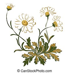 Hand drawn colorful bouquet of chamomile flowers isolated on whi