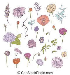 Hand drawn colorful floral elements set. Collection with different flowers and plant.