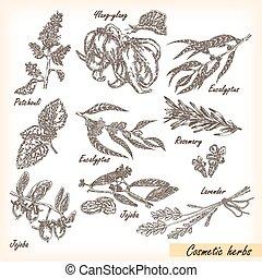 Hand drawn cosmetic herbs. Plant patchouli, jojoba,...