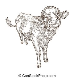 Hand drawn cow isolated on white background. Farm animal design. Vector illustration in sketch style.