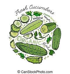 Hand Drawn Cucumber 02 A