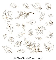 Hand drawn cute leaves from different kind of trees isolated on white