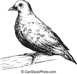 hand drawn cute pigeon illustration