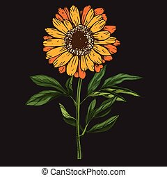 Hand drawn daisy flower with stem and leaves isolated on black background. Botanical vector illustration