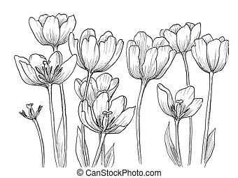 hand drawn decorative tulips for your design - Hand drawn...